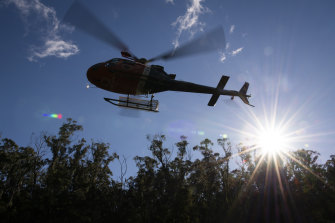 A National Parks and Wildlife Service helicopter departs after dropping a planting team at one of the wild translocation sites for the pines.