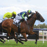 Future bright for Adelaide Cup aspirant Coolth