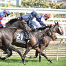 Tiger Moth's road to success may not wind back to Melbourne Cup