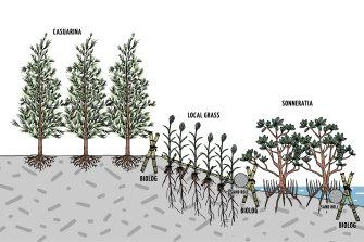 Dr Dao's green embankment plan.
