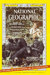 A 1965 National Geographic magazine cover with Jane Goodall and her chimpanzees.
