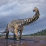 Largest dinosaur discovered in Australia a true world heavyweight