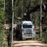 'Black hole': EPA sought nod to spy on timber plans after being left in the dark