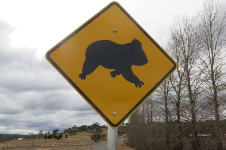 Koala crossing signs have been installed between Canberra and Cooma.