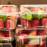 Strawberry growers shut the farm gate after tampering crisis
