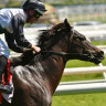 Race-by-race guide and tips for Albury on Tuesday