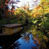 Beauty and tranquillity at the Nezu garden