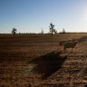 Insincere and misguided displays of concern make the drought worse
