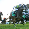 'He's just awesome': Evergreen Mister Sea Wolf chasing another Gong