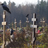 Crows sit on grave crosses in the section of a cemetery reserved for coronavirus victims in Kolpino, outside St. Petersburg, Russia.
