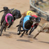 Life ban upheld in greyhound blood baiting case