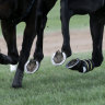 Staff forced out of racing after refusing COVID-19 vaccine