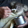 Government tackles toxic culture, conflict and burnout in wildlife rescue sector