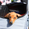 The RSPCA has backed calls to allow pets on public transport in Brisbane.
