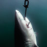 Shark attack comes a month after drum lines pulled from reef