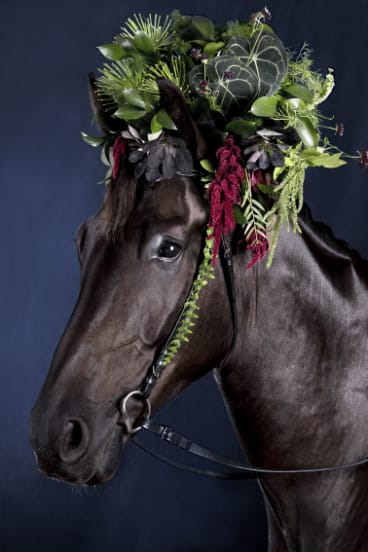 Sutton gelding Oscar is the first star of the 'Blooming' series.
