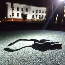 'Not much there for snakes': Python retrieved at Old Parliament House