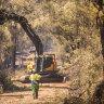 Massive salvage effort for bushfire-burnt timber a race against time