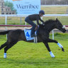 Euro raider Away He Goes out of Melbourne Cup with tendon injury
