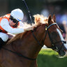 Gerald Ryan delves into bag of tricks with Standout but weather a big worry