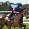 Humidor 'clearly produces his best' in Cox Plate: Eustace