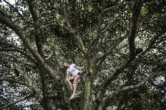 Lost art of tree climbing: the process of working out which branches they can and can't reach is a chance for them to learn about their own limitations and their risk profile.