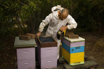Beekeeper Gerard Berger says wasps have been plaguing Mallacoota over summer.