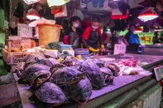 Live turtles for sale at the Xihua Farmers' Market in Guangzhou, China.