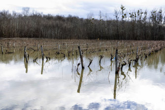 Floodwaters submerge vineyards near Cognac, south-western France, in February.