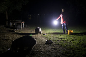 "Sue Pridmore of Breakfast Creek feeds the local wombats. She fears for the future of her home, the  spring, the wildlife, and  ""the clarity of the air"" if the mining machines move in."