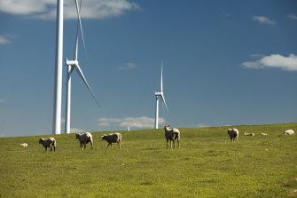 Hornsdale wind farm in South Australia.