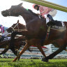 Grand old Diva shows hard tracks the issue for Melbourne Cup raiders