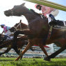 NSW trainers want Racing Australia to take over welfare of Cup horses