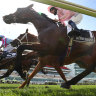 Champion horse was lame before fatal 2020 Melbourne Cup run