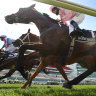 VRC boss calls for rethink on where to house international stayers after Cup fatality