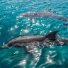 Queensland is the only state where dolphins can be bred for entertainment