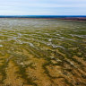 'Best chance': Scientists, advocates divided over Murray-Darling future