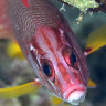 Light in the darkness: Fish with eyes that made scientists look twice