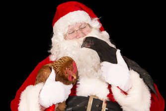A Santa with two chickens, photographed by Julie Hansen of Pet Photos Plus.