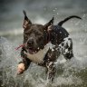 Dogs freed in off-leash trial for Brisbane beaches