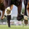 Race-by-race tips and preview for Armidale on Tuesday