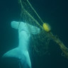 Shark nets and culls don't necessarily make Australian beaches safer