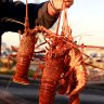 Crayfish to be sold direct from boats to consumers in bid to combat COVID-19 slump