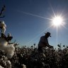 Cotton farmers did not kill the fish - it's time to hear the facts