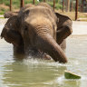 'Grand old dame' to get elephant companions after circus life