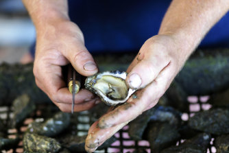 Angel Seafood says stock numbers are strong and pricing is steady.