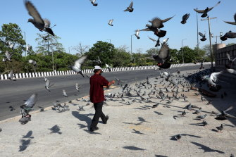 An Indian man feeds pigeons in Noida on the outskirts of New Delhi. The Indian government has completely sealed COVID-19 hotspots in 15 districts including Noida.