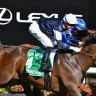 Homesman flies to fairytale Australian Cup win