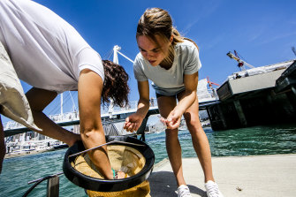 The Seabin fleet filters 600,000 litres of water and collects 3.6 tonnes of marine litter every day.