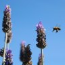Help your local bees. Plant blue flowers